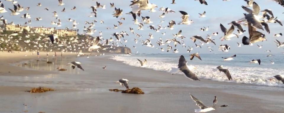 Slider-Template-for-Websites---35-Monarch-Bay-birds